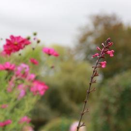 Monet's Gardens | maroon