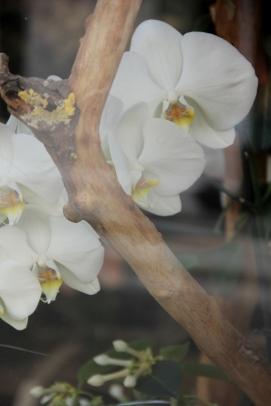 Paris | orchids