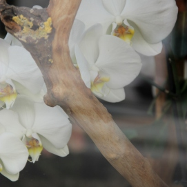 Paris | orchids