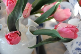 Amsterdam | tulips