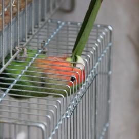 Paris | un oiseau