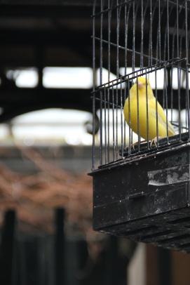 Paris | un autre oiseau