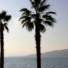 Antibes | palms