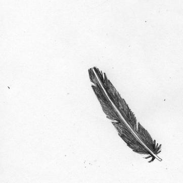 Pencil Sketch   Feather